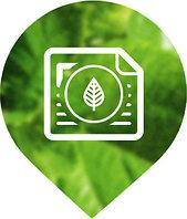 Лесопатологическое обследование зеленых насаждений