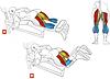 Сгибание ног лежа AMA317, фото 2