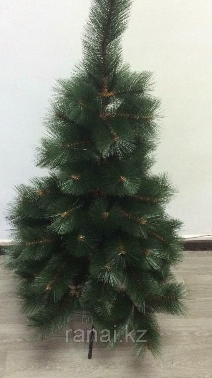 Сосна зеленая в алматы (150см)