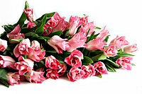 GT Machinery поздравляет всех женщин с 8 марта!