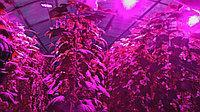 Фитолампа с защитой IP65  для гроубоксов и домашних растений, фото 1