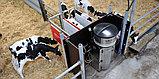Автоматическая система выпойки телят Lely Calm, фото 3