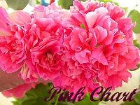 Pink Chart / укор.черенок