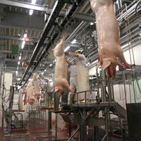 Линия убоя свиней, фото 1