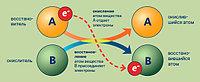 Кодотранспоранты / Процессы окисления-восстановления (4 шт.)