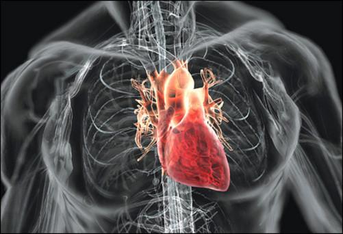 Сердечные болезни. Комплекс 1