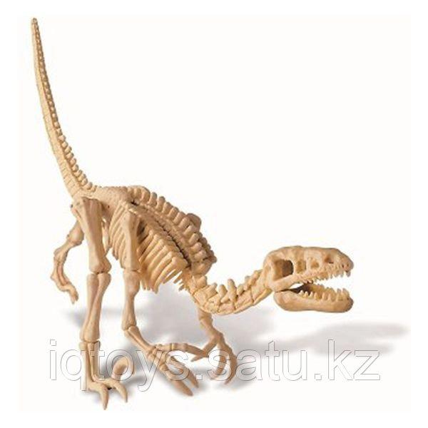 4M 00-13234 Скелет Велоцираптора