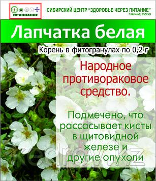 Лапчатка белая (корень в фитогранулах) 15 г.