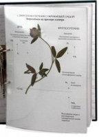 Гербарий Лекарственные растения (20 видов)