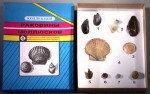 Коллекция Многообразие раковин моллюсков