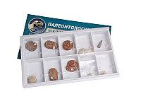 Коллекция Палеонтологическая (формы сохранности растений и животных)