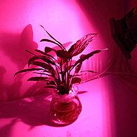 Фитолампа светодиодная для цветов и растения