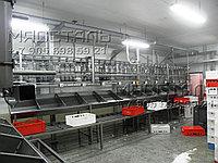 Весовая сортировка тушек птицы, фото 1