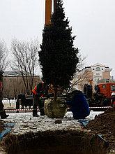 Зимняя посадка крупномеров в Атырау