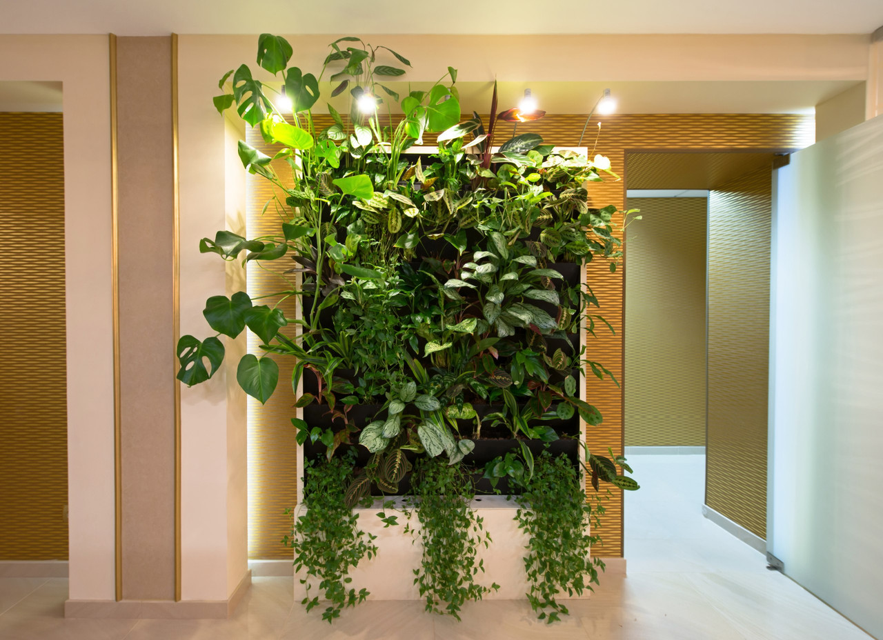 Вертикальное озеленение в Атырау