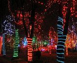 Подсветка деревьев, кустов. Обмотка, освещение деревьев светодиодной лентой, дюралайтом, фото 3