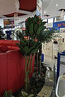 Искусственные растения Frangipani, фото 1