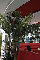 Искусственные растения Palm 1347LVS, фото 1