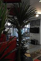 Искусственные растения Winebottle Bush/100/2-175, фото 1