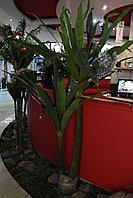 Искусственные растения Dragenea 2Trunks 44LVS, фото 1