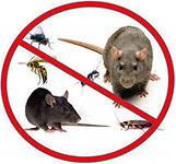 Уничтожение мышей в Актау