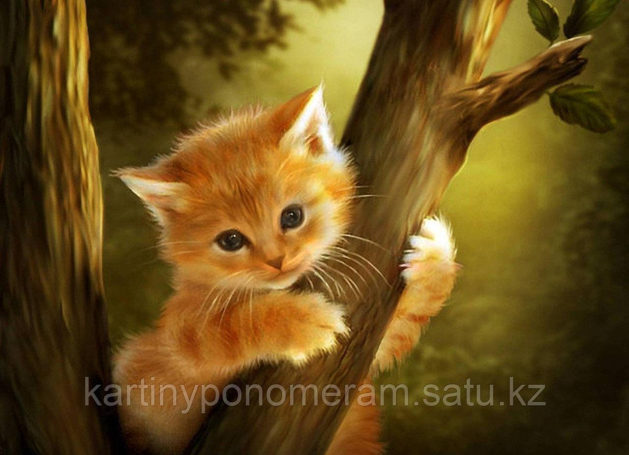 """Картина по номерам """"Котенок на дереве"""""""