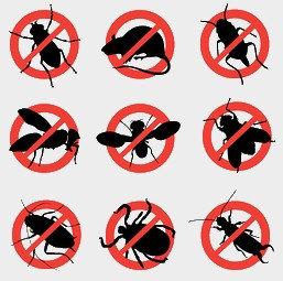 Средства для уничтожения бытовых насекомых и грызунов
