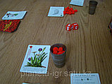 Настольная игра Помидорный Джо, фото 4