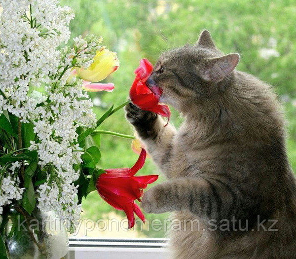 "Картина по номерам ""Ароматный цветок"""