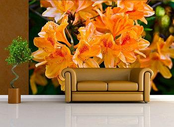 Фотообои Азалия оранжевая