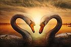 Фотообои Лебеди на закате, фото 7