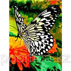 """Картина по номерам""""Прекрасная бабочка"""" 30*40"""
