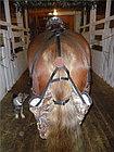 Мешок под хвост лошади, фото 2