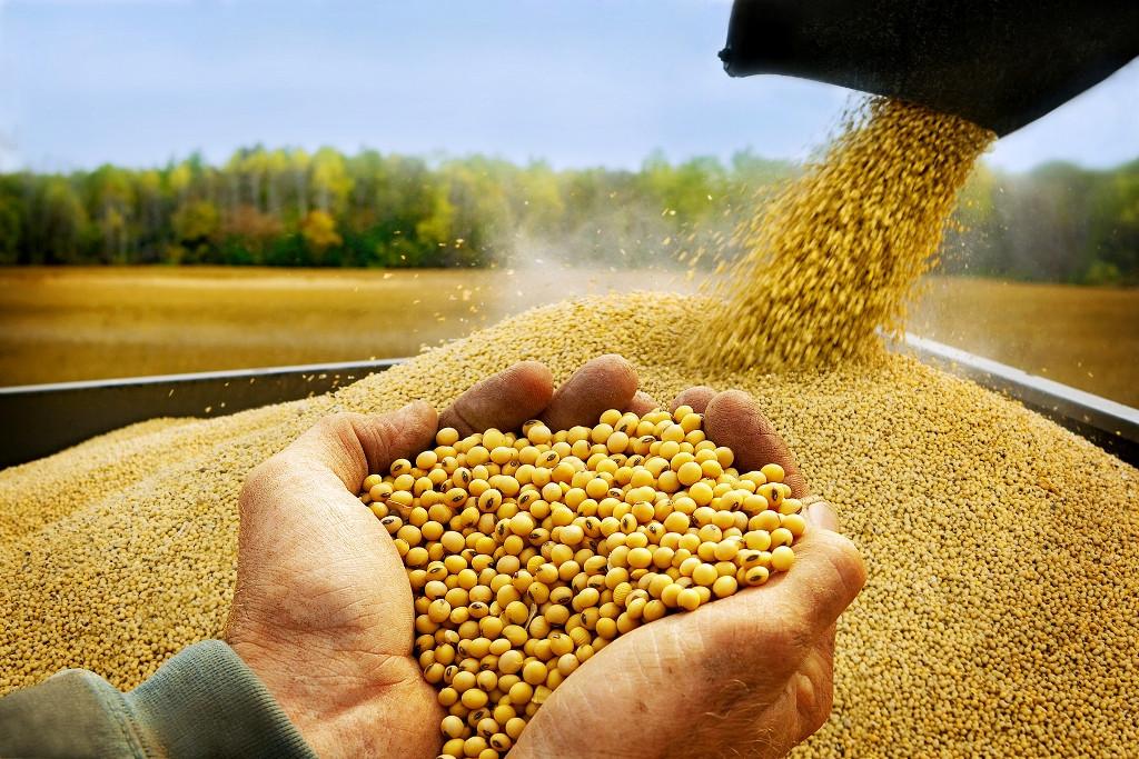 Услуги по фасовке зерновых, зернобобовых, маслечных культур