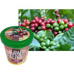"""Набор для выращивания """"Арабский карликовый Кофе"""""""