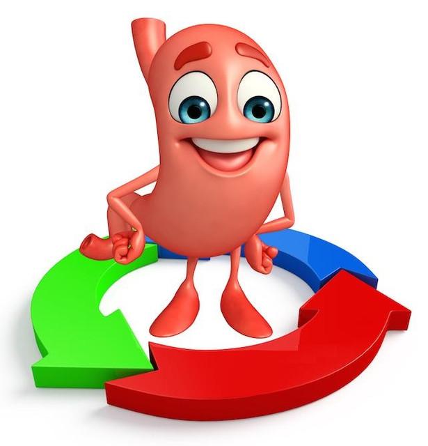 Здоровье желудочно-кишечного тракта