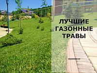 Лучшие газонные травы
