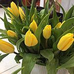 Тюльпаны к 8 марта. Принимаем предварительные заказы. Расцветка тюльпанов различная от нежно-белого до ярко-красного цвета.