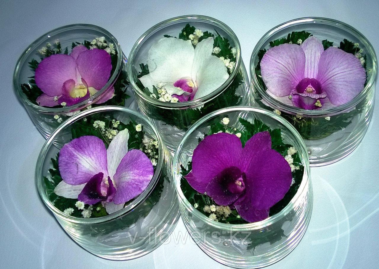 Живые цветы в стекле SSO