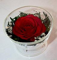 Цветы в вакууме CuSR