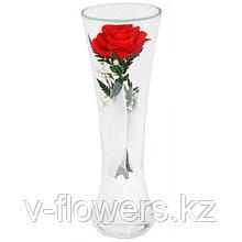 Живые розы 22 см в стекле CuHR