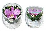 Живые цветы в стекле SSO, фото 2