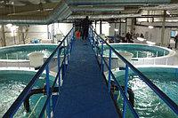 Рыбные комплексы, установка за...