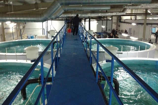 Рыбные комплексы, установка замкнутого водоснабжения -УЗВ .
