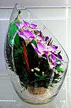 Цветы в колбе ArLO, фото 3