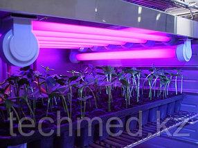 Культивационные инкубаторы CLIMACELL-Komfort, фото 3