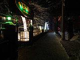 Подсветка деревьев, кустов. Обмотка, освещение деревьев светодиодной лентой, дюралайтом, фото 5