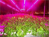 Светотехнический расчет по фитоосвещению теплиц и растений