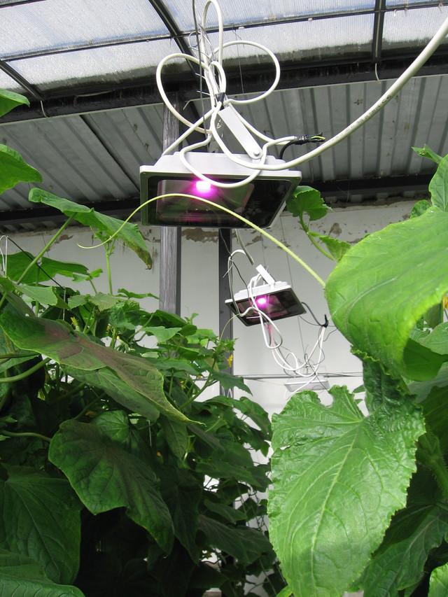 фито прожекторы 50 W в теплице