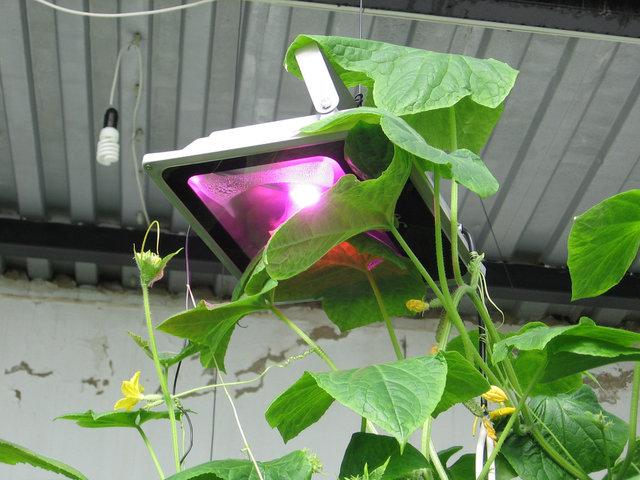 Применение влагозащищенный фитосветильников полного спектра на высокоэффективныхамериканских светодиодных матрицахBridgelux для огурцов и помидор в теплице.